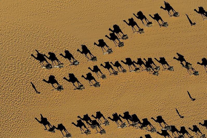 [Image: camels.jpg]
