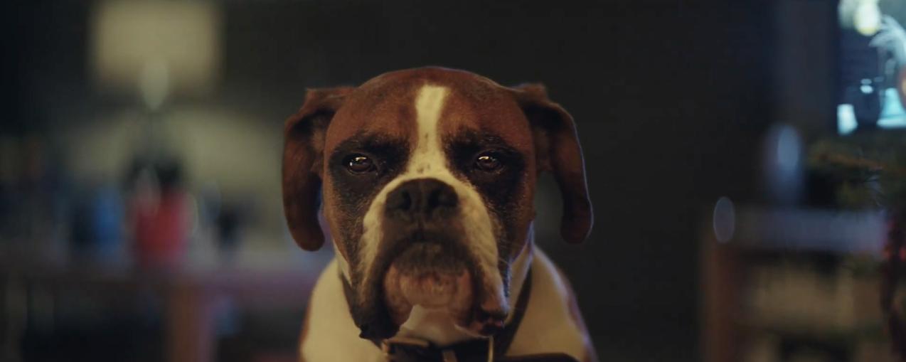 nhilist-hound